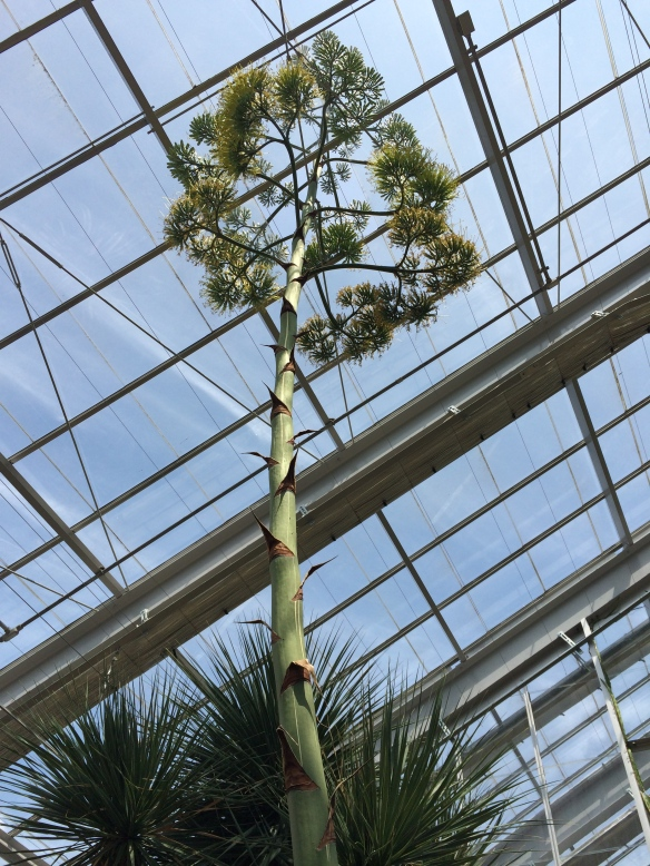 They had a panel open and Mr. Agave was growing out of the ceiling!